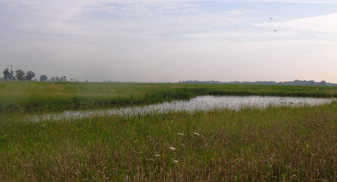 Kuhlwein South Wet Prairie Wetland Design & Restoration