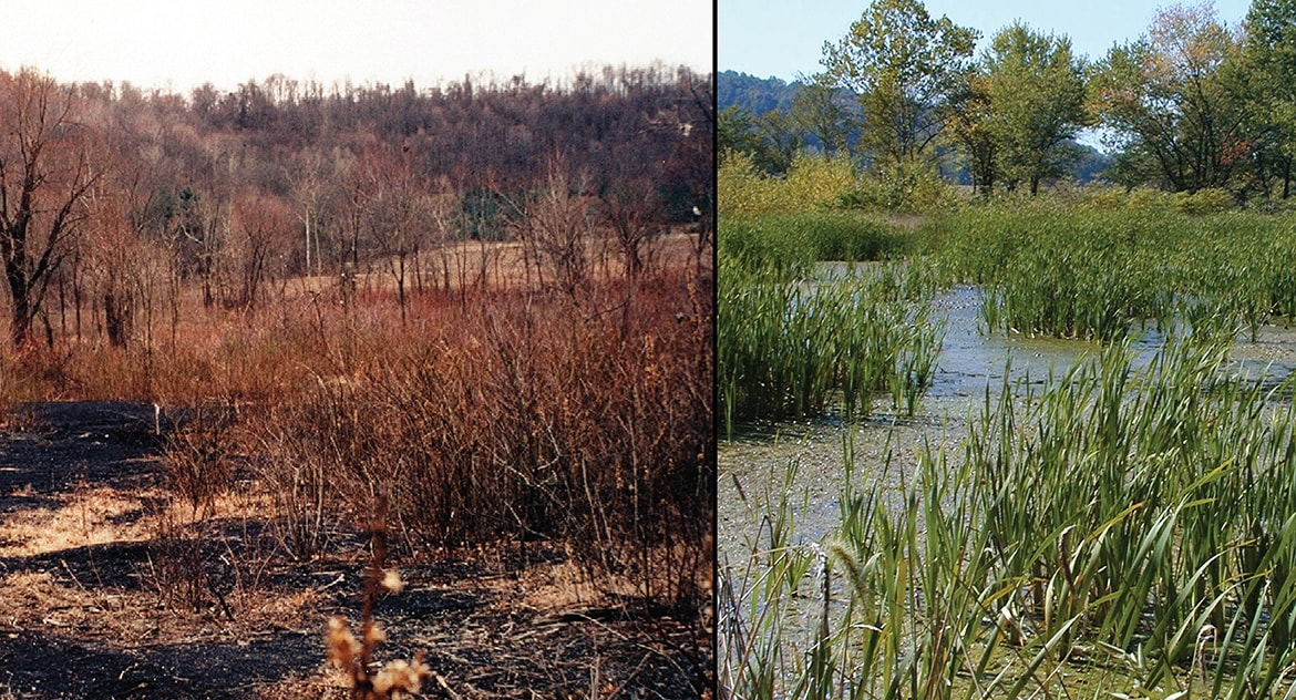 Wills Creek Ecological Restoration
